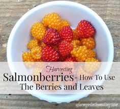 Harvesting salmonberries - how to use the berry, leaves, stems, and bark.  afarmgirlinthemaking.com