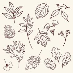 Autumn Illustrations Fall Harvest Line Drawings Clipart PNG Pumpkin Leaves Foliage Apple Picking DIY Thanksgiving Linework Fall Leaves Drawing, Leaves Sketch, Acorn Drawing, Fall Drawings, Outline Drawings, Illustration Blume, Autumn Illustration, Leaves Doodle, Draw Leaves