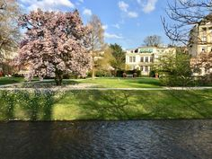Cherry blossom in the Lichtentaler Allee in Baden-Baden. It is a WOW place ! Just a few minites wakl away from our www.hotel-am-sophienpark. Parks, Hotels, Black Forest, Cherry Blossom, Switzerland, Travel Tips, Germany, Mansions, House Styles
