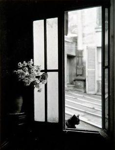 by Willy Ronis Le chat derrière la vitre, Gordes, 1957 Dark Photography, Vintage Photography, Black And White Photography, Street Photography, Timeless Photography, White Picture, Photo Black, Black White Photos, 17 Black