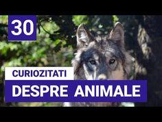 30 de Curiozitati interesante despre Animale - YouTube Youtube, Youtube Movies