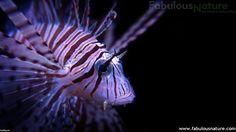 Underwater Life Photos 60