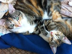 These are Liz Calah and Ginger Bella.