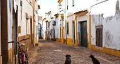Street with dogs Natural Park, Merida, Lisbon, Portuguese, Photo Wall, Around The Worlds, Landscape, Portugal Travel, Roots