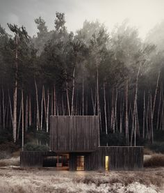 Huize Looveld, designed by Studio Puisto Architects and Bas van Bolderen Architectuur. The image and forest are the results of a SOA masterclass.