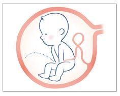 한눈에 보는 임신 10개월 배 속 아기 변화