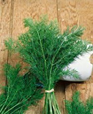 How To Grow Dill | Herb Gardening Guide