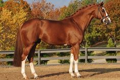 Canadian Warmblood Horse Breeders Association - Stallions