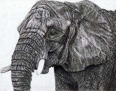 Elephant Drawing 2 by singletonjames on DeviantArt