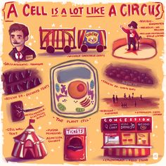 cell city school project ideas - Google Search