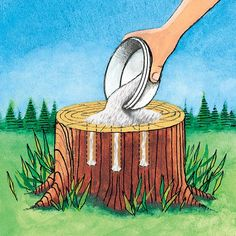 Tree Stump Remover ~ Get rid of tree stumps by drilling holes in the stump and filling them with 100% Epsom salt. Follow with water, and wait. Live stumps may take as long as a month to die and start to decompose all by themselves.