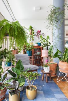 plants in pots. Indoor Garden, Indoor Plants, Home And Garden, House Plants Decor, Plant Decor, Plantas Indoor, Deco Nature, Decoration Plante, Plant Aesthetic