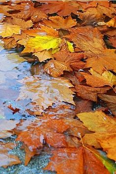 **There is something so beautiful about autumn leaves in water. by lacey