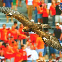 Auburn University - War Eagle!