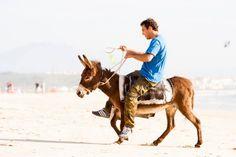 Donkey on beach, Tarifa   Osel na pláži, Tarifa