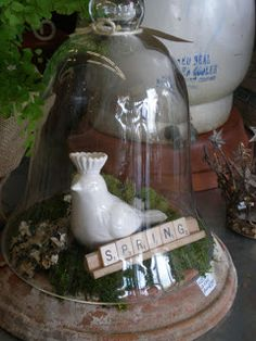 Great idea for use of a cloche