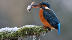 Vogel op tak met vis in zijn snavel