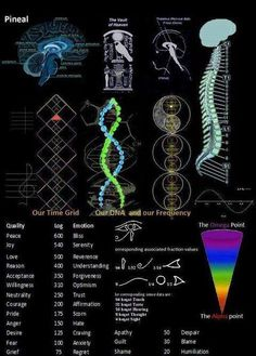 The Physiology of Consciousness!