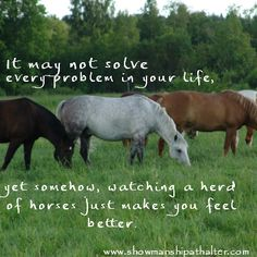 It may not solve every problem in your life; yet somehow, watching a herd of horses just makes you feel better.