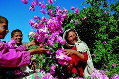 WALA (Dr.Hauschka) Proyecto Rosa en Afghanistan