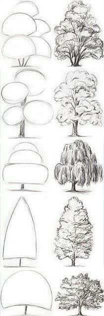Drawing Tips Tree Drawing Tutorial. Start with basic geometric shapes. Art Painting, Sketches, Art Instructions, Sketch Book, Art Drawings, Art Projects, Tree Drawing, Pencil Art Drawings, Art Tutorials