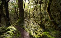 Milford Track in Neuseeland © Maier&Maier Photography