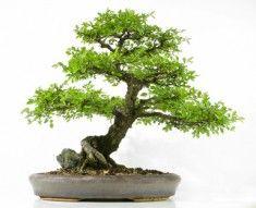 Bonzaï un arbre dans ma maison sur http://ift.tt/1TKmnFL