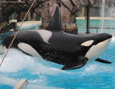 Orcas Seaworld, Bottlenose Dolphin, Sea World, Whales, Dolphins, Animals, Men's, Animales, Animaux