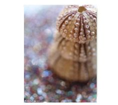 Brown Sea Urchin Stack Natural History Print by machelspencePHOTO, $7.99