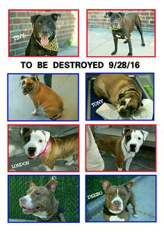 🔴🔴🔴THE KILL LIST FOR WEDNESDAY 9-28-16💔💔PLEASE SHARE NOW & SAVE A LIFE💜💜ALL AVAILABLE @NYCDOGS.URGENTPODR.ORG 🔴🔴🔴🔴