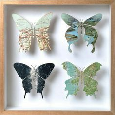 Don't ruin the local wildlife.. just cut pretty butterflies out of maps or photos and frame them on your wall for more authentic memories.  http://wetravelandblog.com
