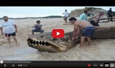 Breaking NEWS! This fish is a monster. Watch the latest news in this video