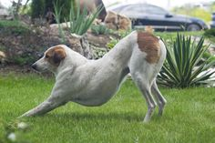 Street dog stretching in yoga style Street Dogs, Yoga Fashion, Photography Portfolio, Animals, Animales, Animaux, Animal, Animais