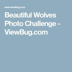 Beautiful Wolves Photo Challenge - ViewBug.com   Enter:  Feb 28 - Mar 14, 2017