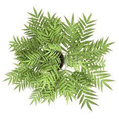 bush top view: vue de dessus d'arbre décoratif en pot isolé sur fond blanc