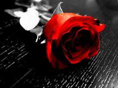 a splash of color pics | Black And White Color Splash Flowers A splash of colour. by broken-