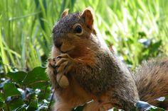 303/365/1398 (April 9, 2012) – Squirrels at the University of Michigan During Spring (April 9, 2012)