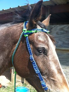 1000 images about tack braided bridles on pinterest for Paracord horse bridle