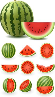 Watermelon illustrations vector | Free Stock Vector Art ...