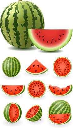Watermelon vector