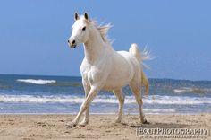 (91) Simply Horses