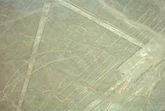 Nazca Lines Parrot
