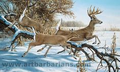 """Breaking Cover - Whitetail Deer"" by Ron Van Gilder Whitetail Deer Pictures, Hunting Painting, Animal Paintings, Deer Paintings, Antler Art, Deer Art, Boy Art, Wildlife Art, Animals Beautiful"