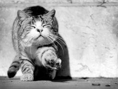 Stretchhh... (by Celeste RC).