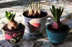 DIY Plante Tasse Deco
