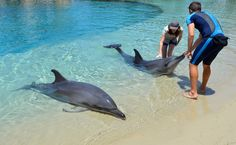 Awareness For Cetaceans — This past summer in 2016, a new dolphinarium...
