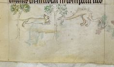 Cat fighting a dragon | from the Queen Mary Psalter, England, between 1310 and 1320