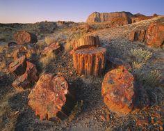 Parque Nacional del Bosque Petrificado (the petrified forest) (Arizona)
