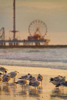 Galveston Pleasure Pier at Dawn | Flickr - Photo Sharing!