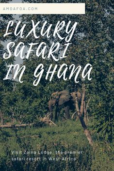 The premier luxury safari resort in West Africa, Zaina Lodge, is located in the heart of Ghana's Mole National Park. Keep reading to find information my full experience Black Fashion Bloggers, Black Girl Fashion, Domestic Flights, Game Reserve, West Africa, Mole, Ghana, Black Girls, Savannah Chat